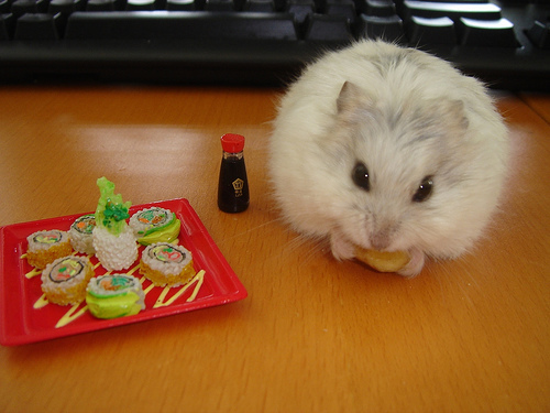 hamster-sushi-seattle-roll--large-msg-119255889702.jpg