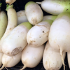 daikon at the groceries